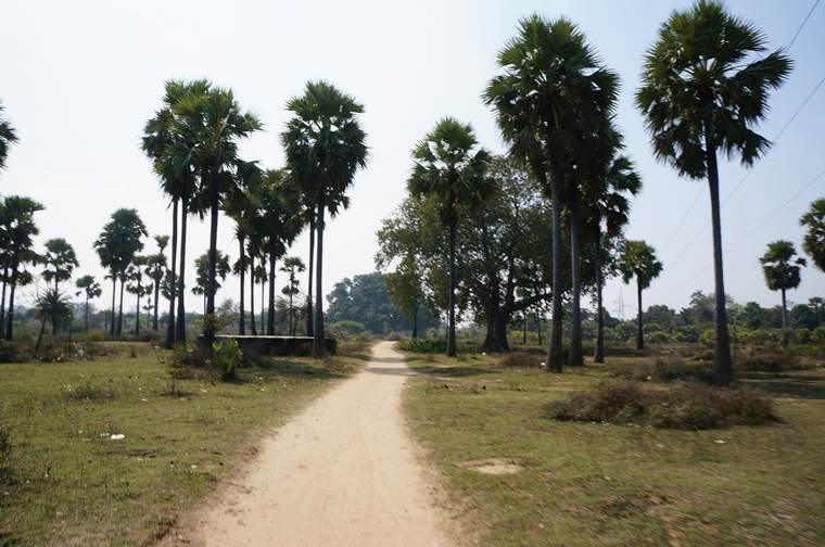 スジャータ村 トトロの木