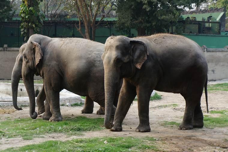 コルカタ動物園